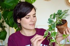 miniature-tagplantes