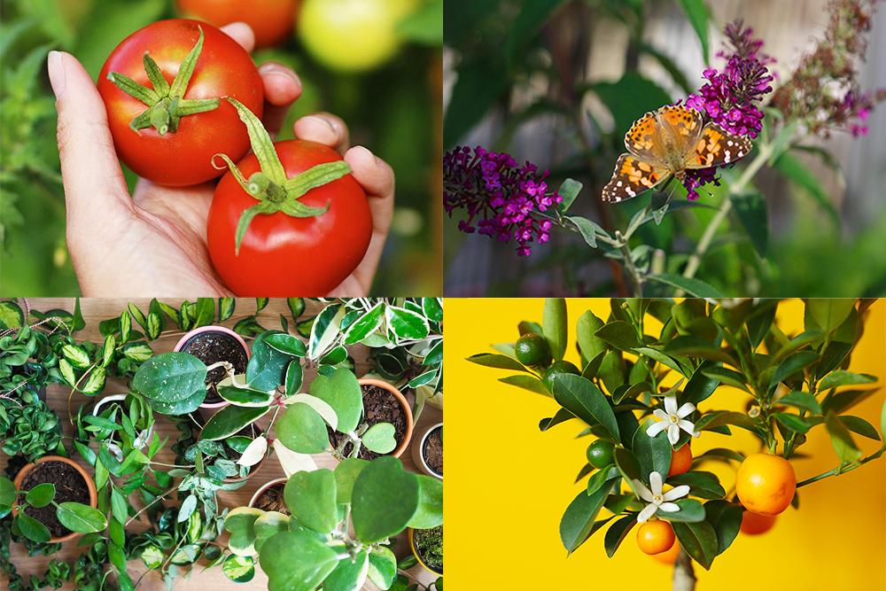 bestof2019-plantes
