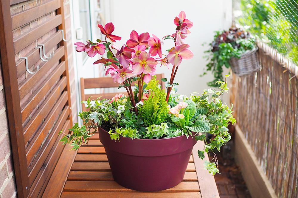 jardiniere-fleurs-hiver-printemps