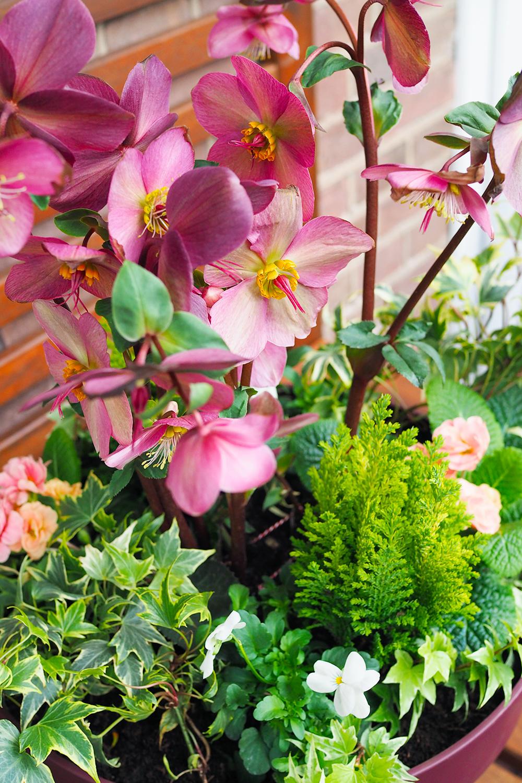 jardiniere-fleurs-hiver-printemps2