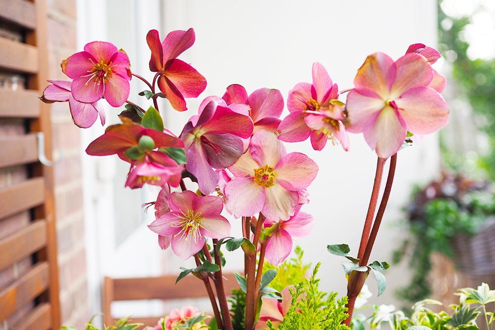 jardiniere-fleurs-hiver-printemps3