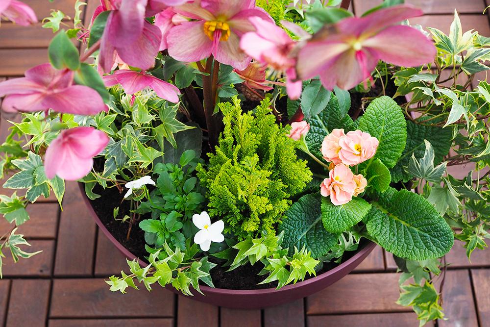 jardiniere-fleurs-hiver-printemps4