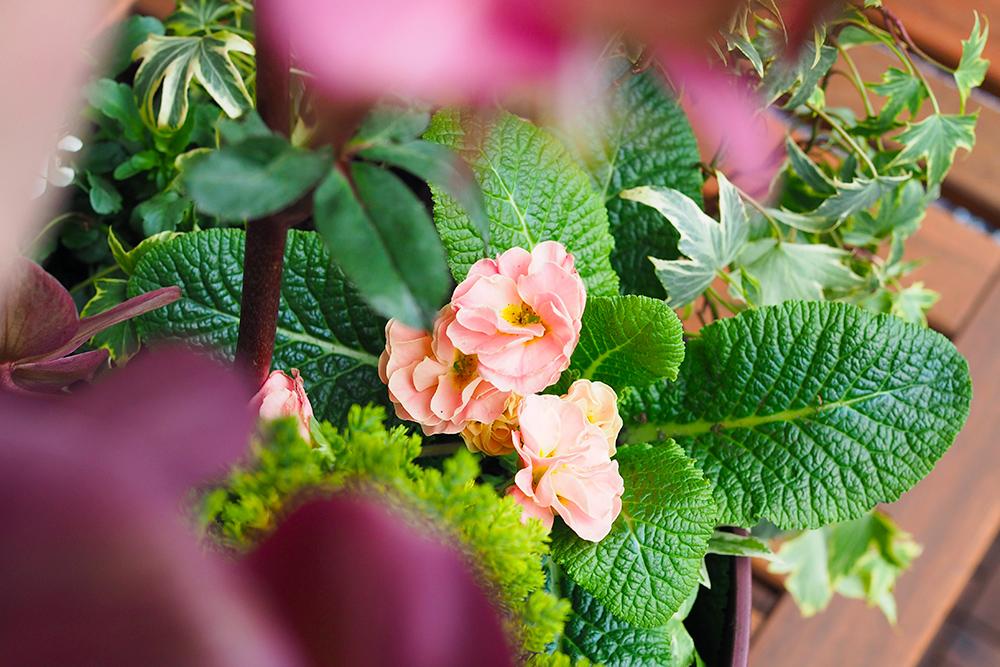 jardiniere-fleurs-hiver-printemps5