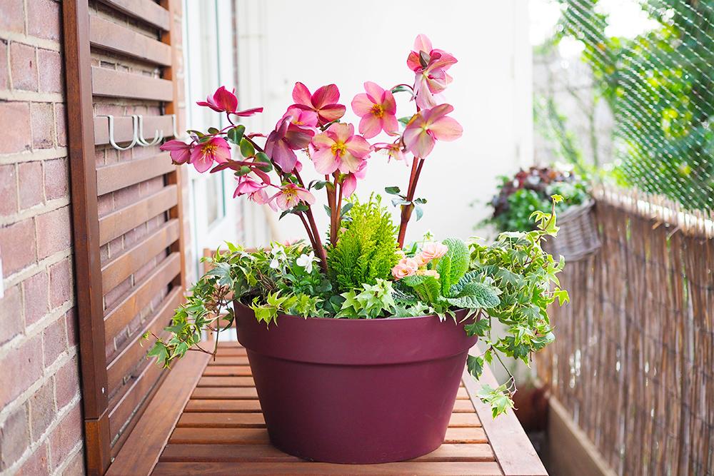 jardiniere-fleurs-hiver-printemps6