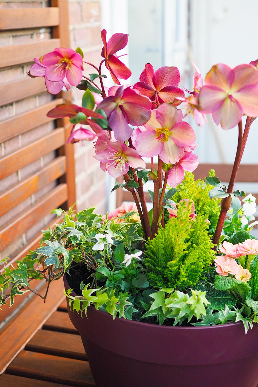 jardiniere-fleurs-hiver-printemps7