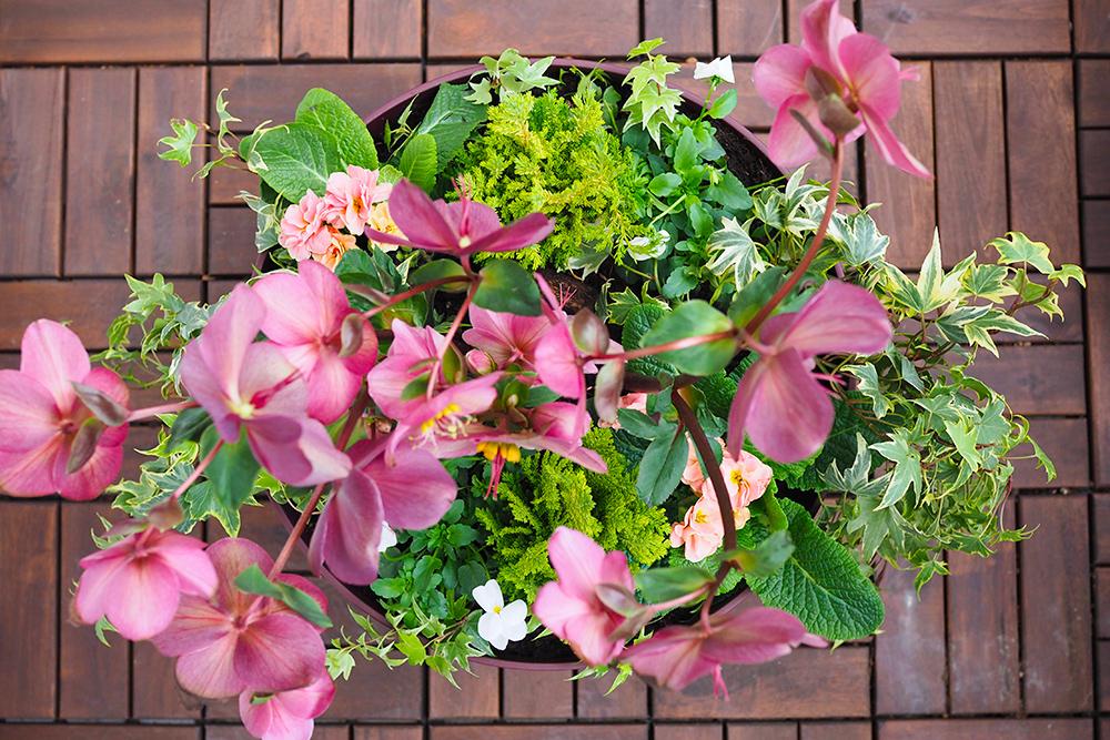 jardiniere-fleurs-hiver-printemps8
