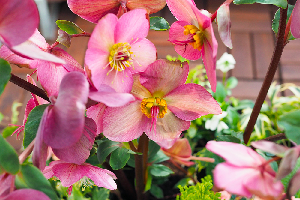 jardiniere-fleurs-hiver-printemps9