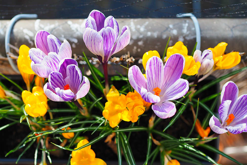 balcon-mars-fleurir