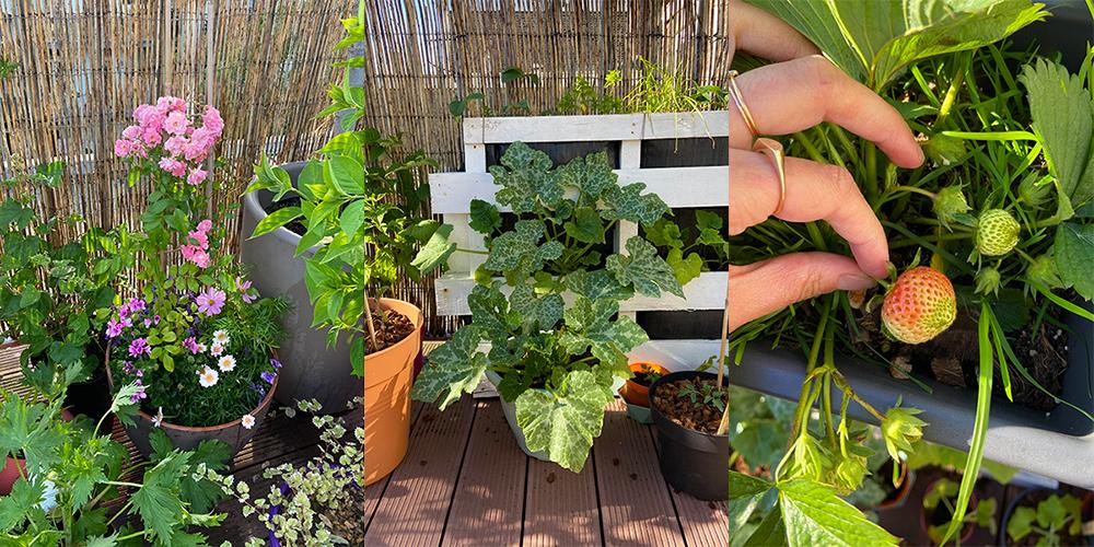 favoris-mai2020-jardinage