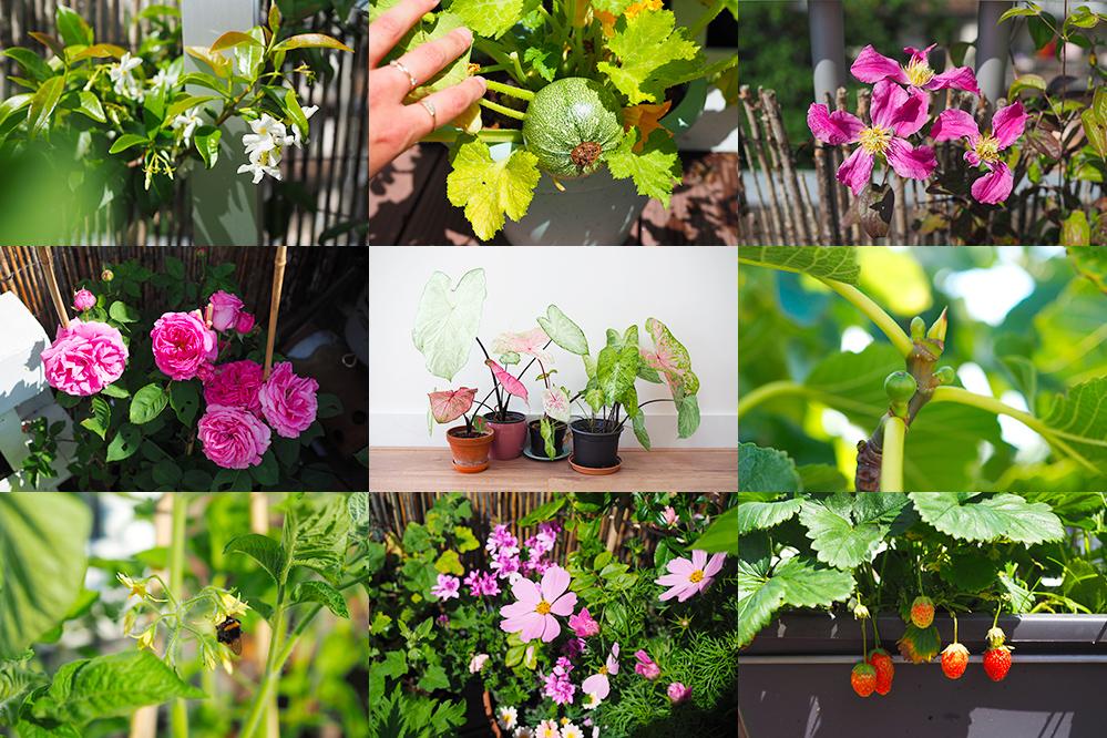 favoris-juin2020-jardinage