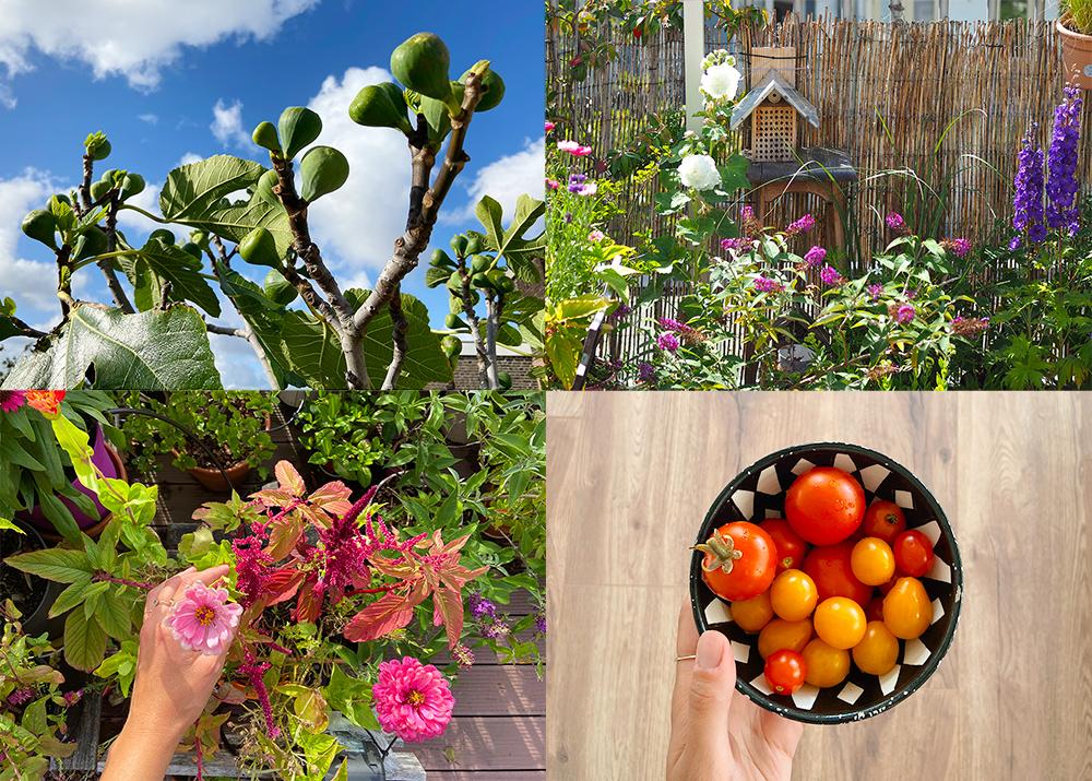 favoris-ete2020-jardinage