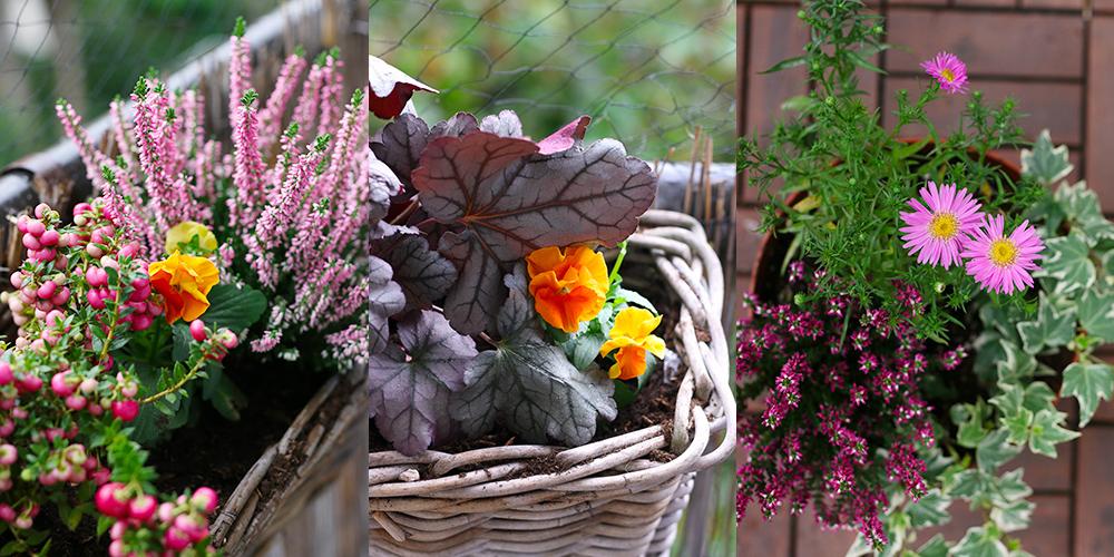 favoris-octobre2020-plantes